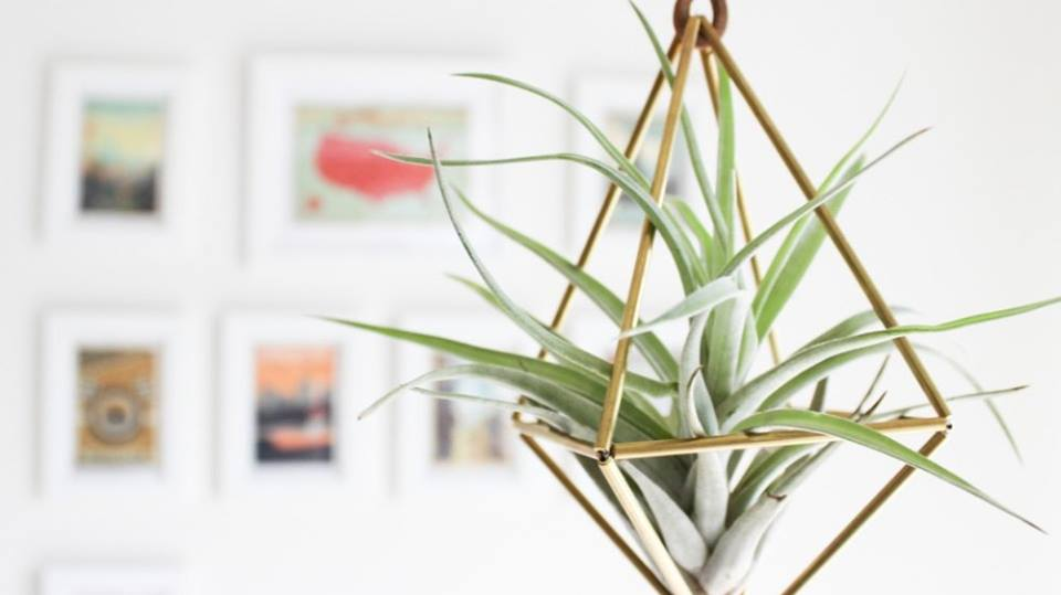 Vera van Brainy Days geeft tips & tricks voor je interieur!